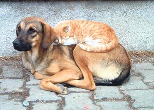 İnsanlar Hayvanları Nasıl Koruyabilir ?
